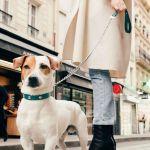 Christofle Royal Jack - Hundeleine